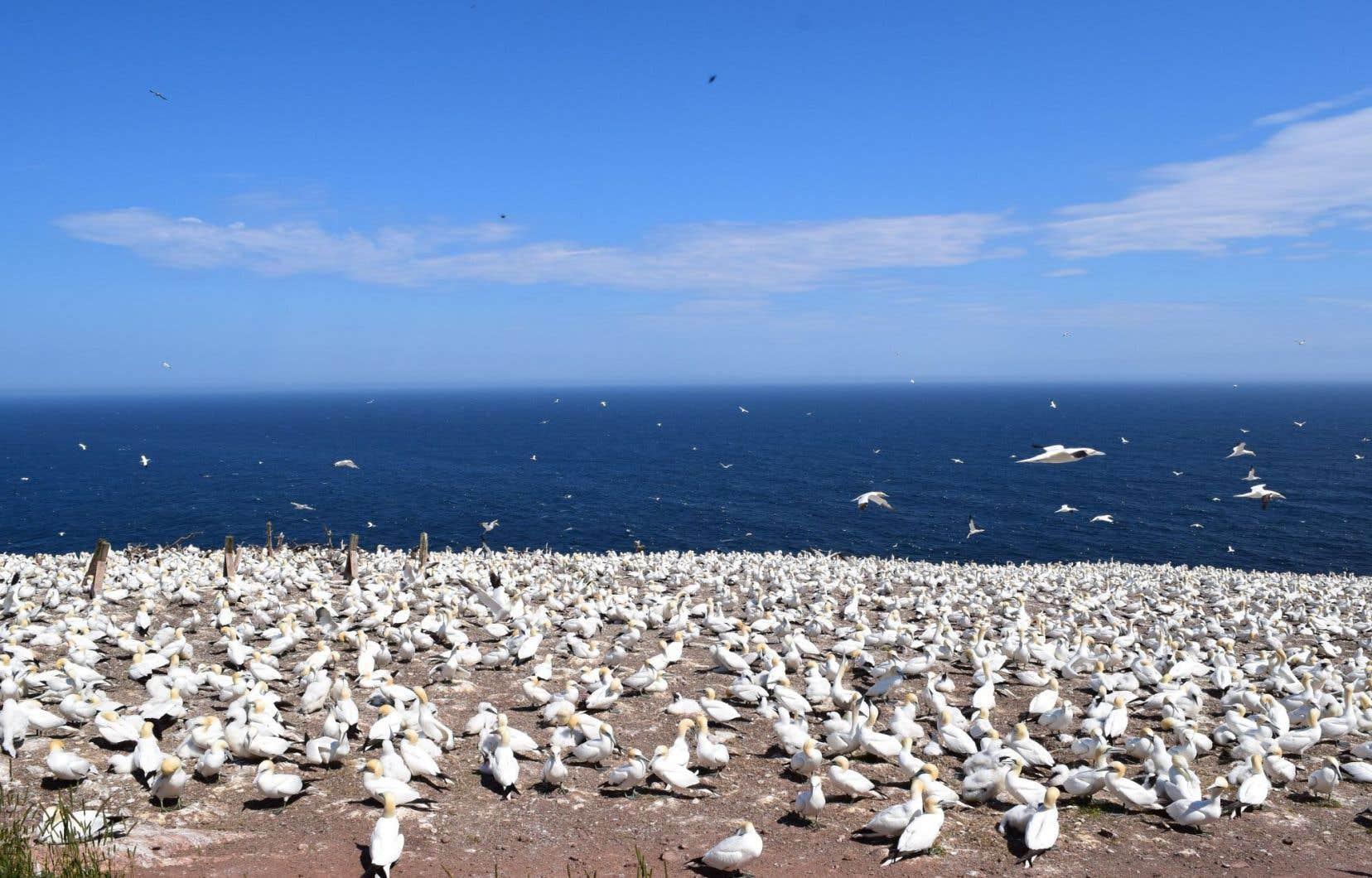 Le fédéral a identifié en 2011 un territoire de 1000 kilomètres carrés au large de l'île Bonaventure, en Gaspésie, en vue d'y créer une zone de protection marine. Le projet n'a pas encore vu le jour.