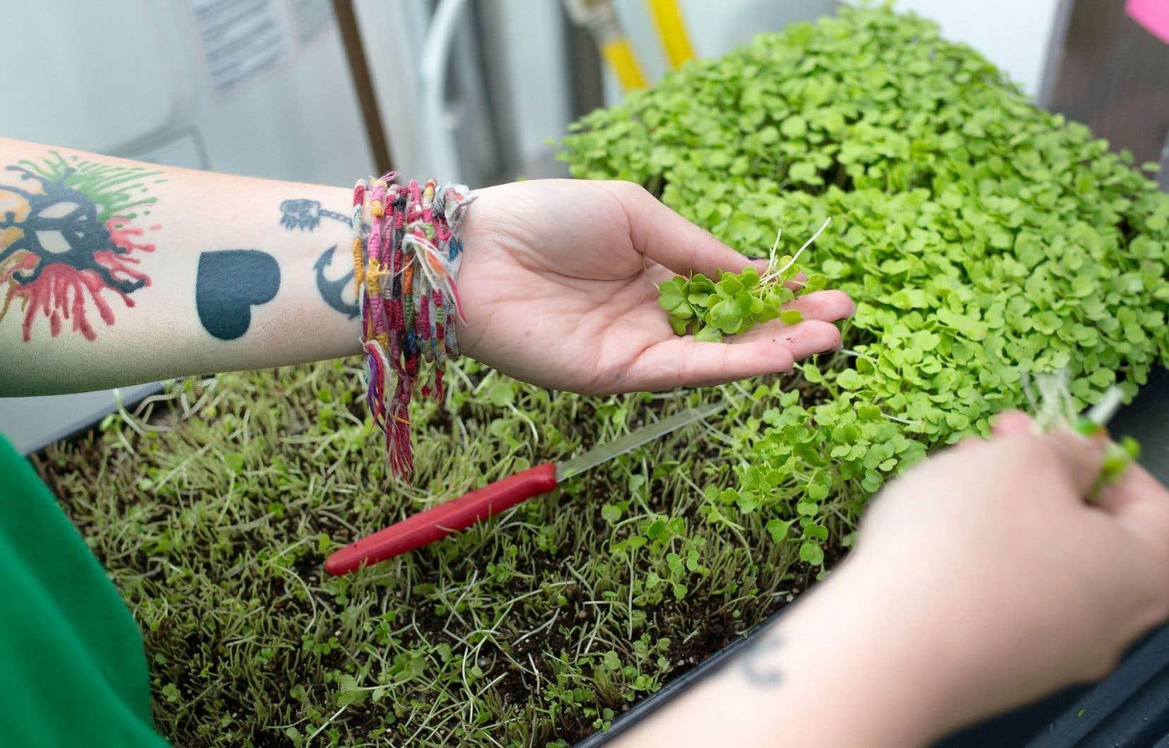 Ce printemps, plus de 1000 plants produits à la serre ont été donnés aux citoyens et aux organismes communautaires du coin.