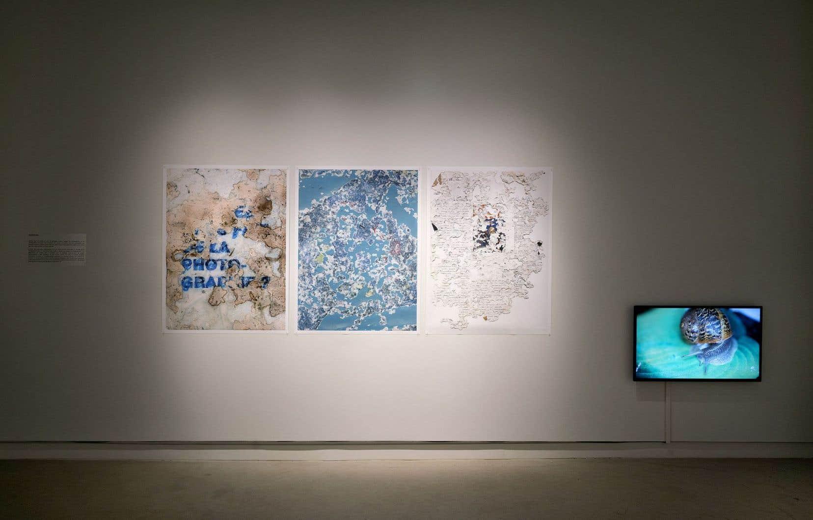 L'artiste travaille sur l'idée que la photo aurait perdu sa fonction de mémoire, d'immortalité et de vérité.