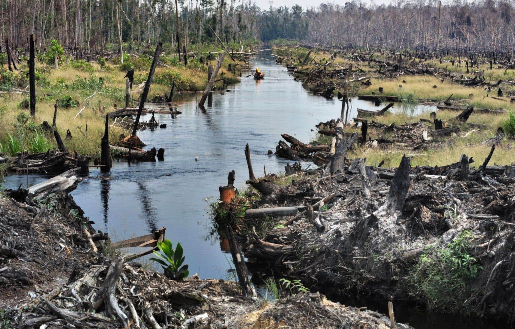 Une tourbière de la province de Riau, à Sumatra, en Indonésie. La forêt tropicale de cette île de l'ouest du pays est ravagée par la déforestation.