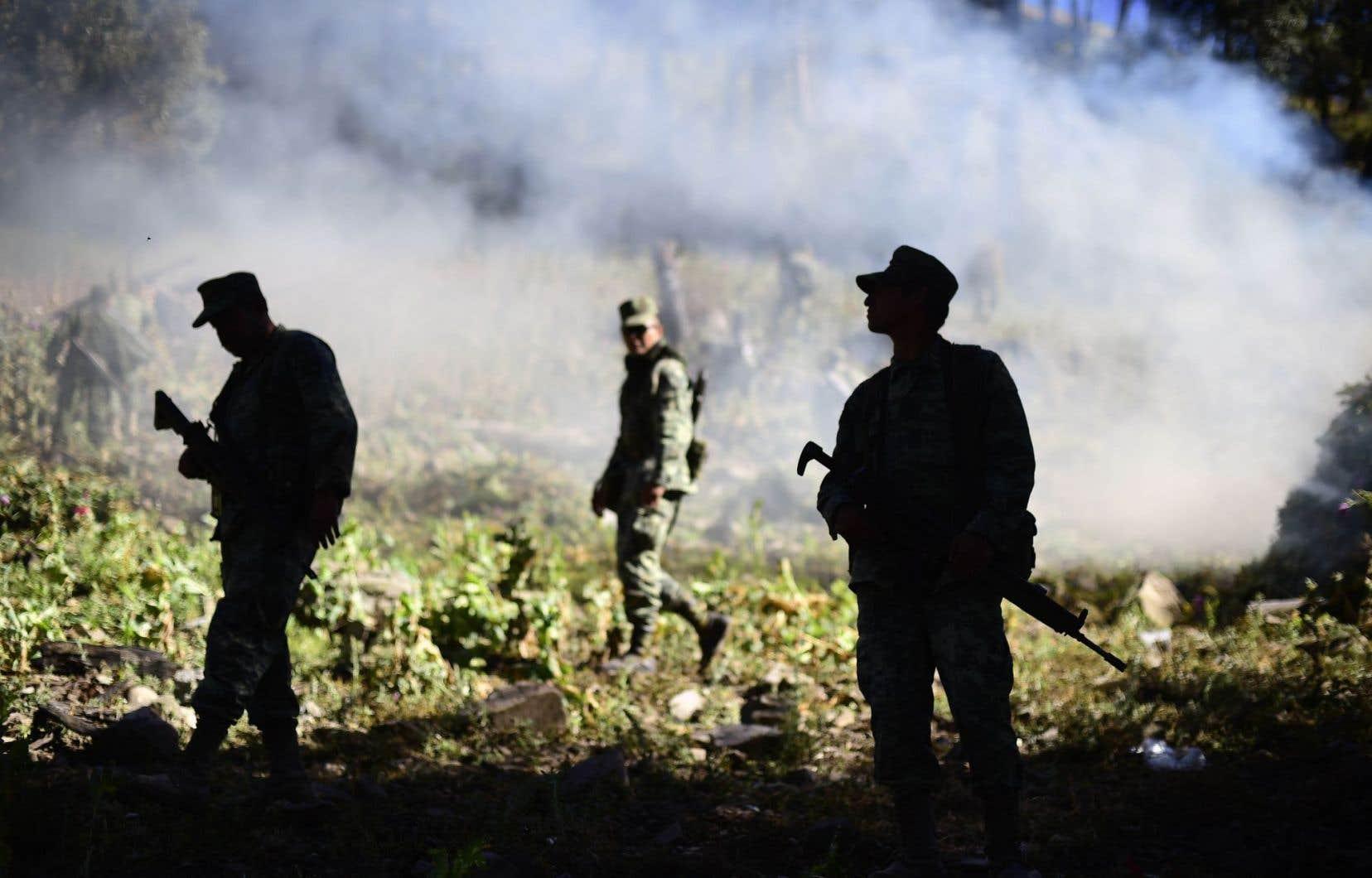 <p>Des soldats mexicains brûlent un champ de pavot dans l'État de Sinaloa dans le cadre de la lutte de l'armée contre la production d'opium, grandissante au pays.</p>