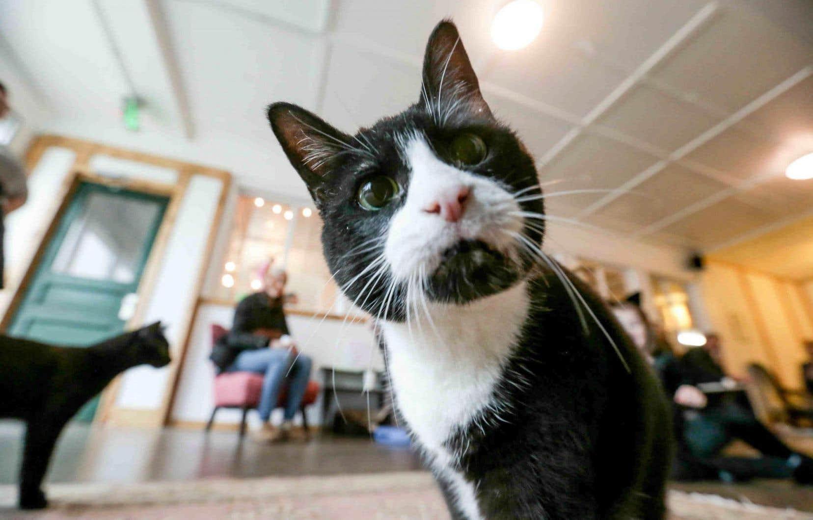 Avant de devenir les vedettes d'Internet, les chats ont tissé des liens étroits avec l'être humain.