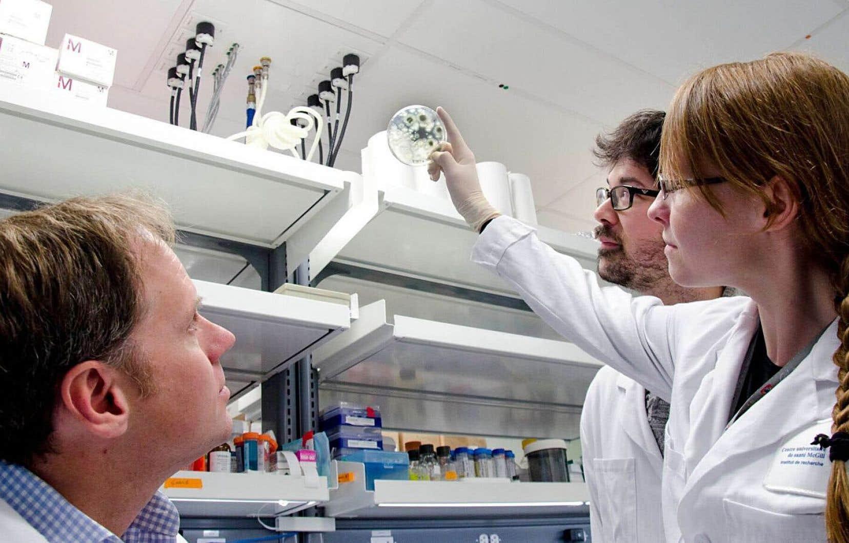 Le Dr Don Sheppard, du CUSM, en compagnie du doctorant Brendan Snarr et d'une étudiante, travaille depuis 10 ans à percer l'armure des bactéries à biofilms.