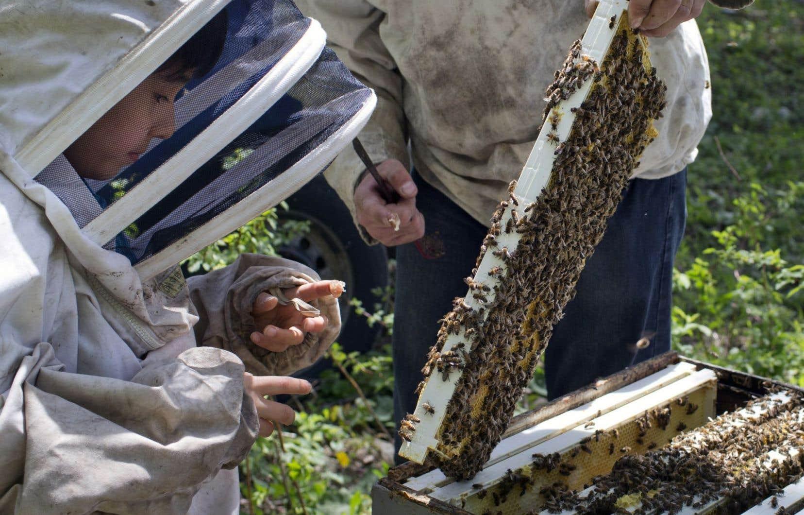 Les néonicotinoïdes sont notamment montrés du doigt pour expliquer l'effondrement des colonies d'abeilles, une situation qui pose un risque majeur pour toute l'agriculture.