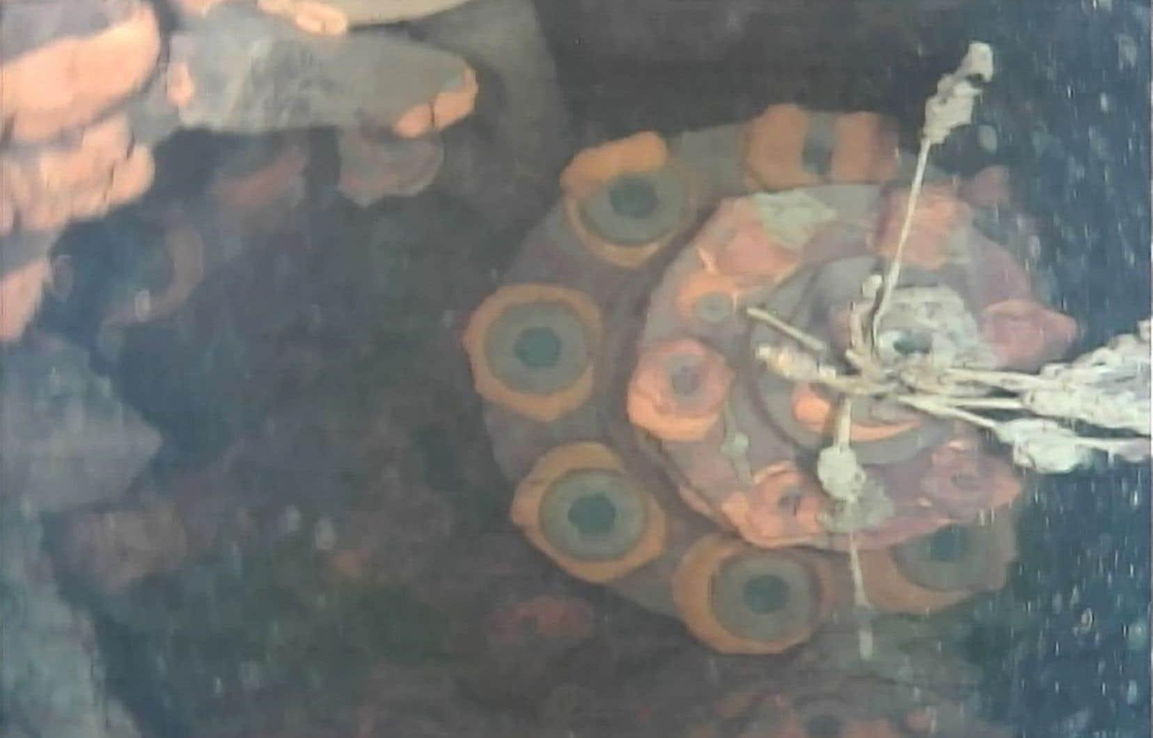 Capture d'écran prise à partir d'une vidéo filmée par le robot sous-marin et fournie par l'Institut international de recherche japonaise pour le déclassement nucléaire (IRID).