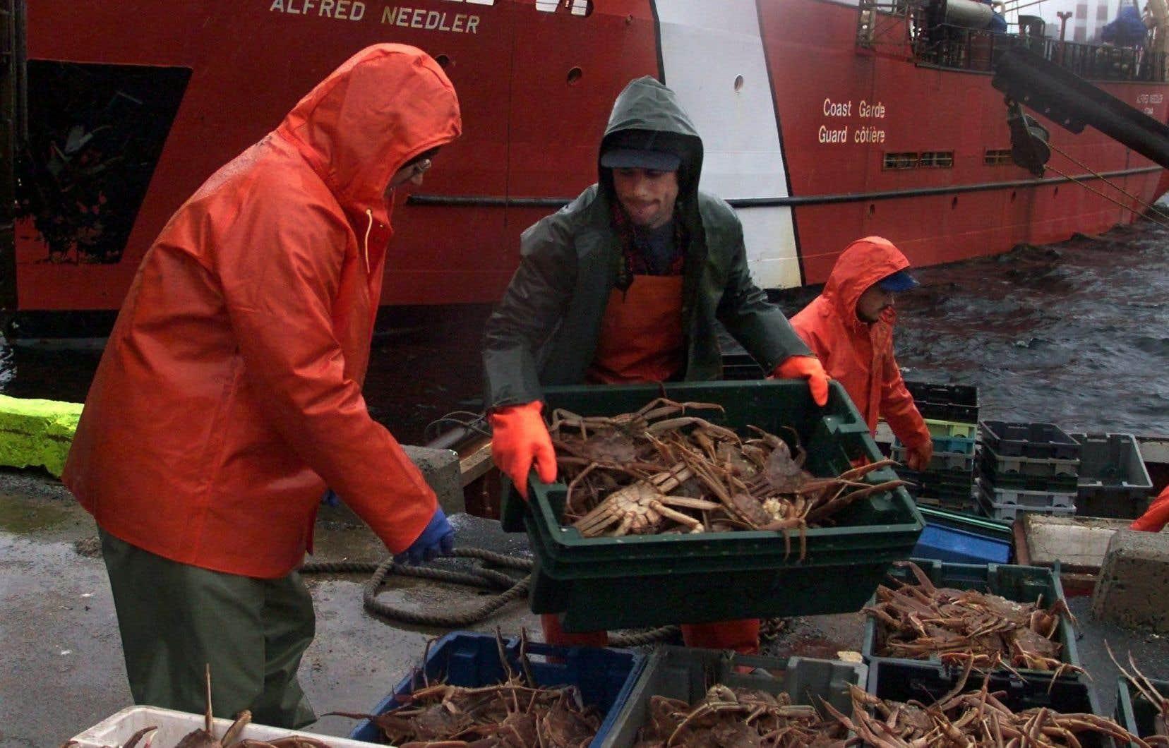 La fermeture anticipée de la pêche au crabe des neiges n'aura que peu d'impact pour les pêcheurs et l'industrie puisque, selon le ministère, le quota alloué pour la saison est déjà réalisé à 98%.