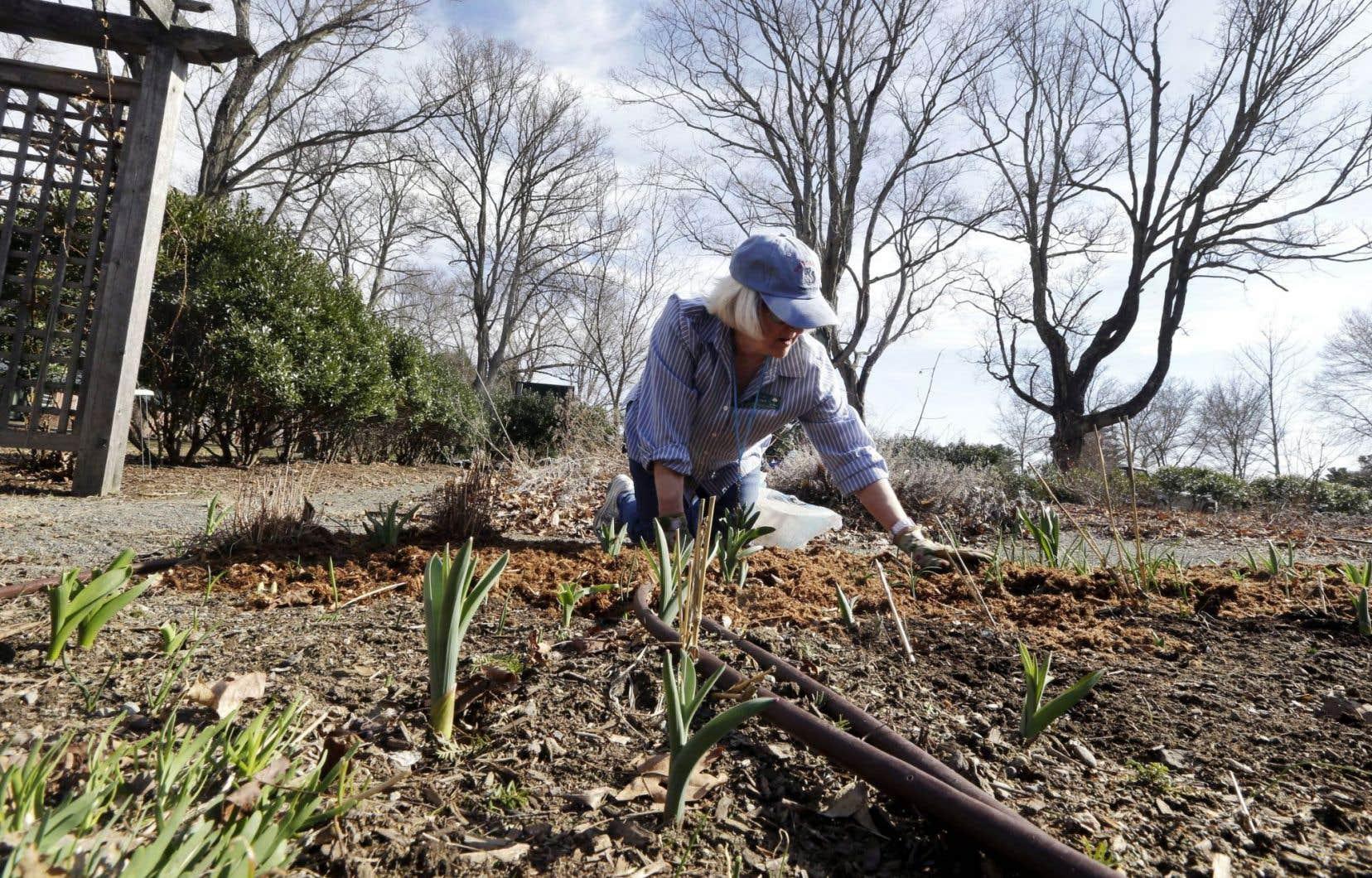 Planter des carottes pendant une heure est une manière saisissante de disparaître, affirme David Le Breton.