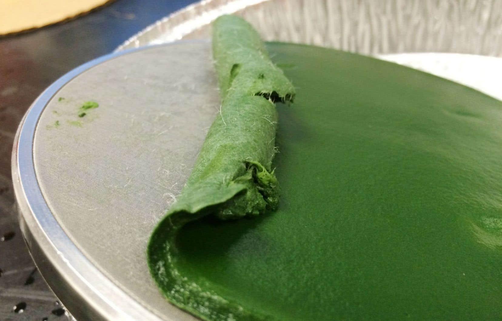 «Nous produisons quelques kilos d'algues par an en laboratoire, mais il faudrait en produire mille tonnes par an» pour un des sites sur lesquels il travaille, explique le chercheur Simon Barnabé.