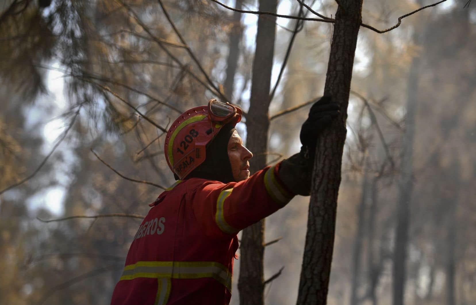 Un pompier surveille la progression d'un incendie dans une forêt entourant le village de Bracal à Abrantes.