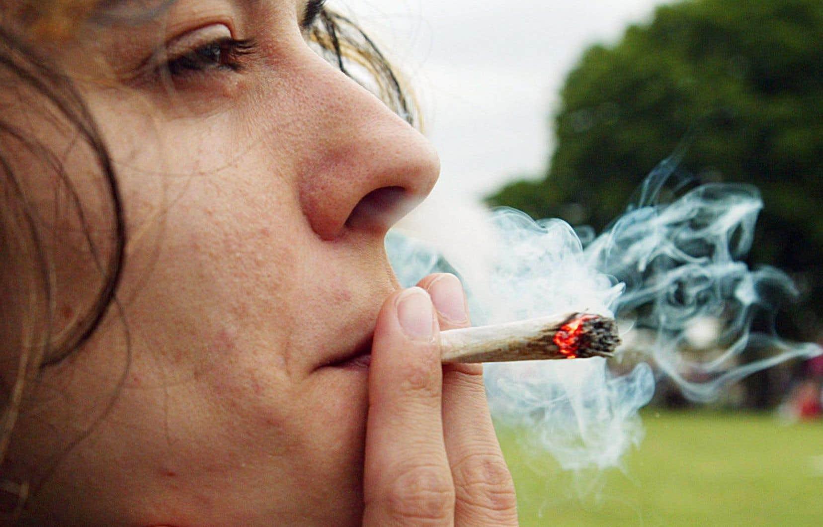La CSDM réclame «une campagne sans précédent» pour expliciter les risques associés à la consommation de cannabis avant l'âge de 25 ans.