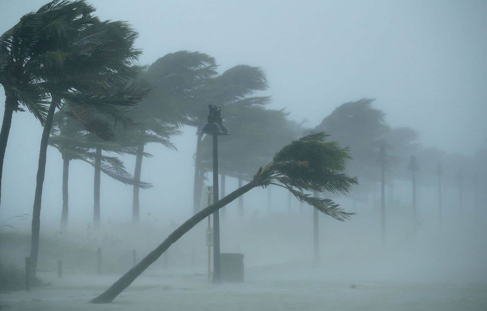<p><em>«Ces 30 dernières années, les tempêtes les plus fortes se sont renforcées du fait du réchauffement des océans»</em>, selon James Elsner, professeur de science atmosphérique à la Florida State University.</p>