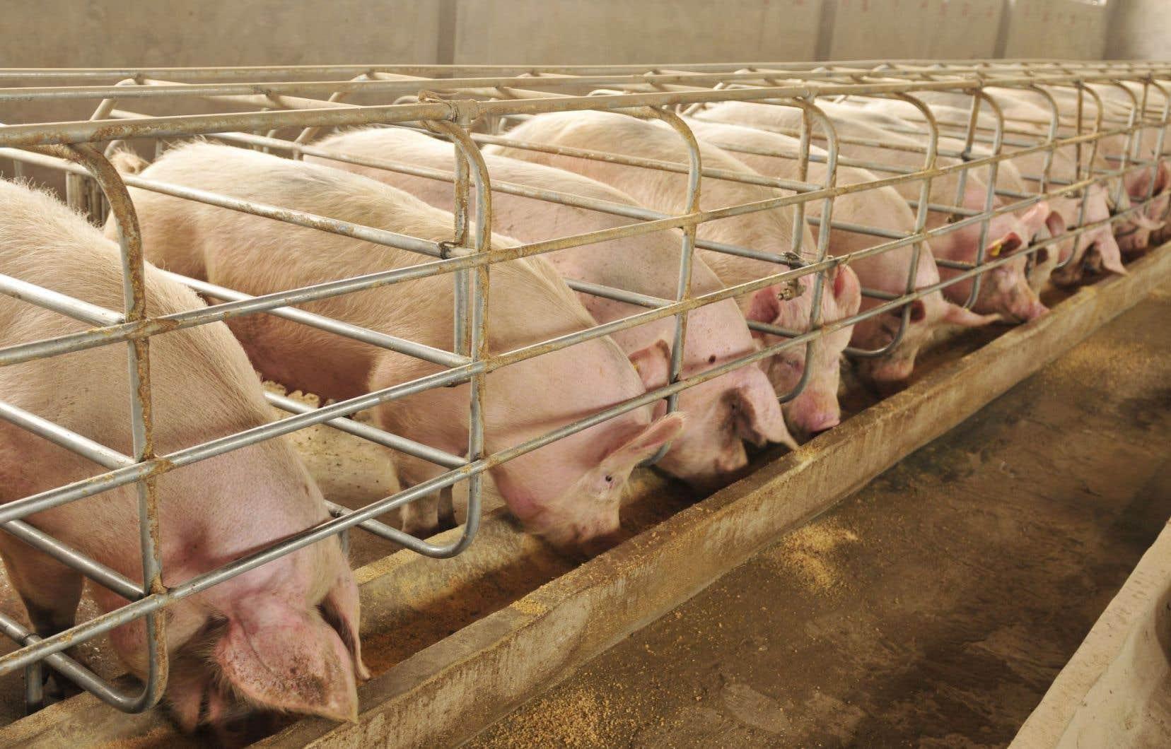 L'entente représente une bonne nouvelle pour les producteurs de porcs canadiens, qui verront leur quota d'exportation augmenter graduellement.