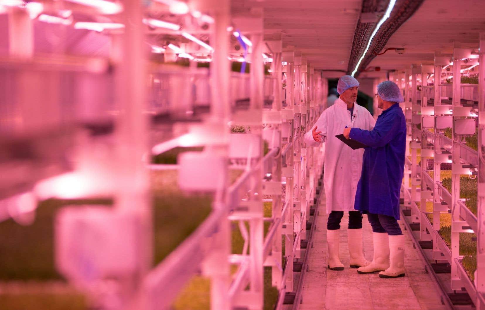 Avec leur projet «Growing underground», Steven Dring et son partenaire Richard Ballard se sont engouffrés dans «l'agriculture verticale».