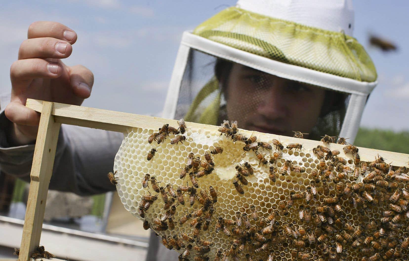 C'est en Amérique du Nord que la proportion de miel contaminé est la plus élevée, soit pour 86 % des échantillons, révèle une étude publiée aujourd'hui dans la prestigieuse revue «Science».