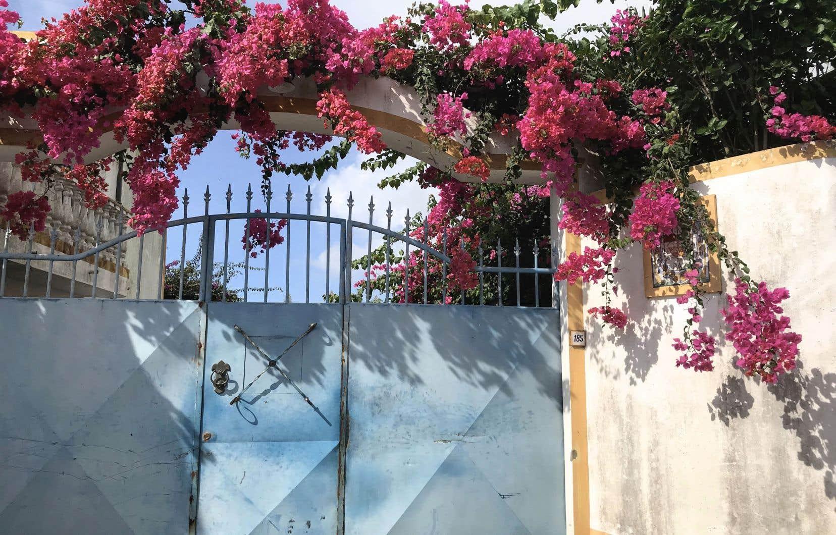 Un joli portail croulant sous les bougainvilliers sur l'île de São Miguel