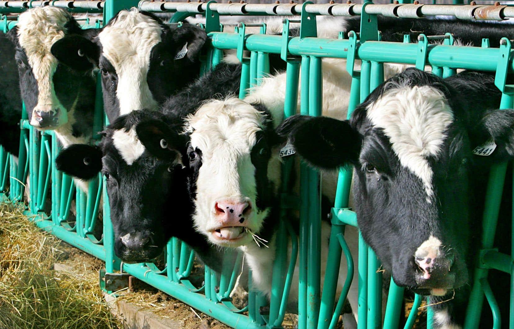 Au Canada, les industries des oeufs,du lait et de la volaille sont régies par un système de gestion de l'offre.