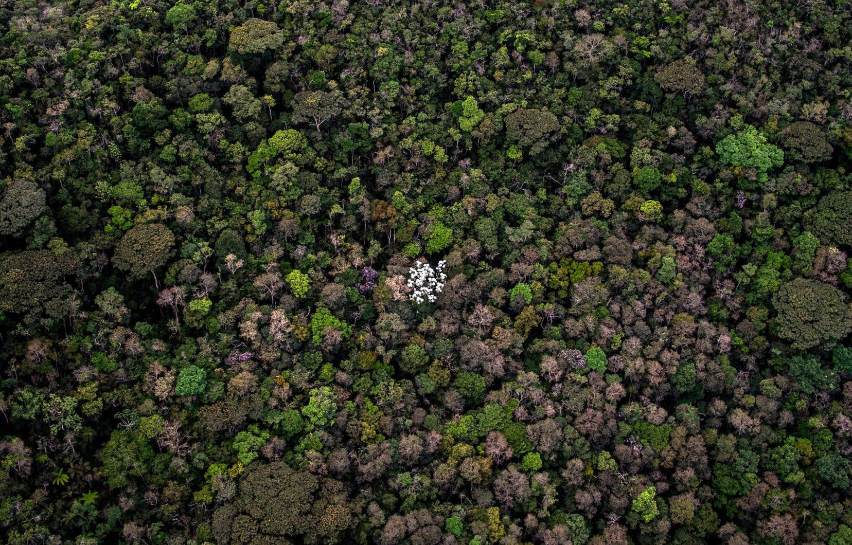 Les cinq pays où les massifs forestiers pourraient réduire le plus les émissions de CO2 sont le Brésil (ci-dessus), l'Indonésie, la Chine, la Russie et l'Inde.