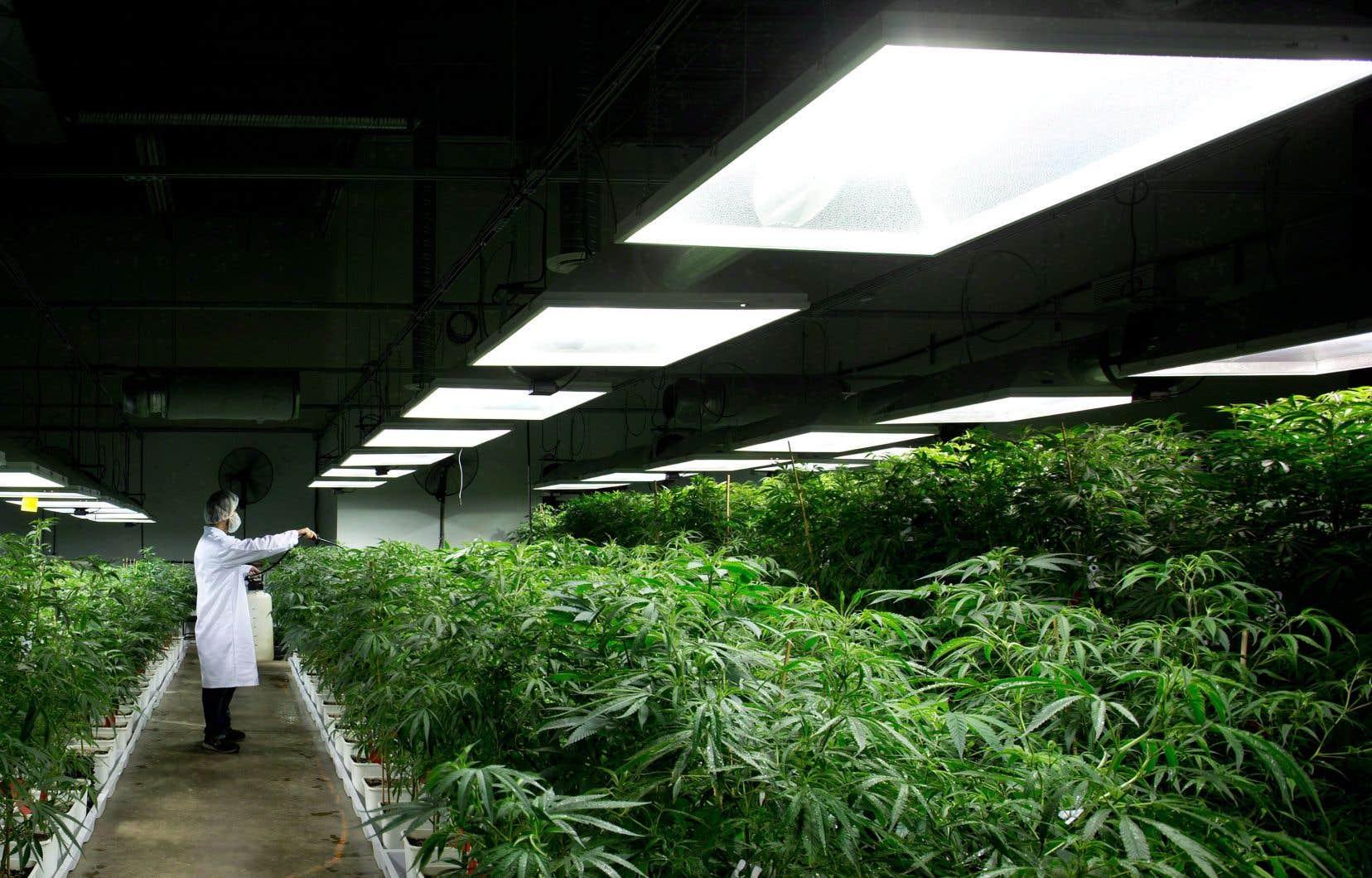 Le cannabis médical est déjà légal au Canada.