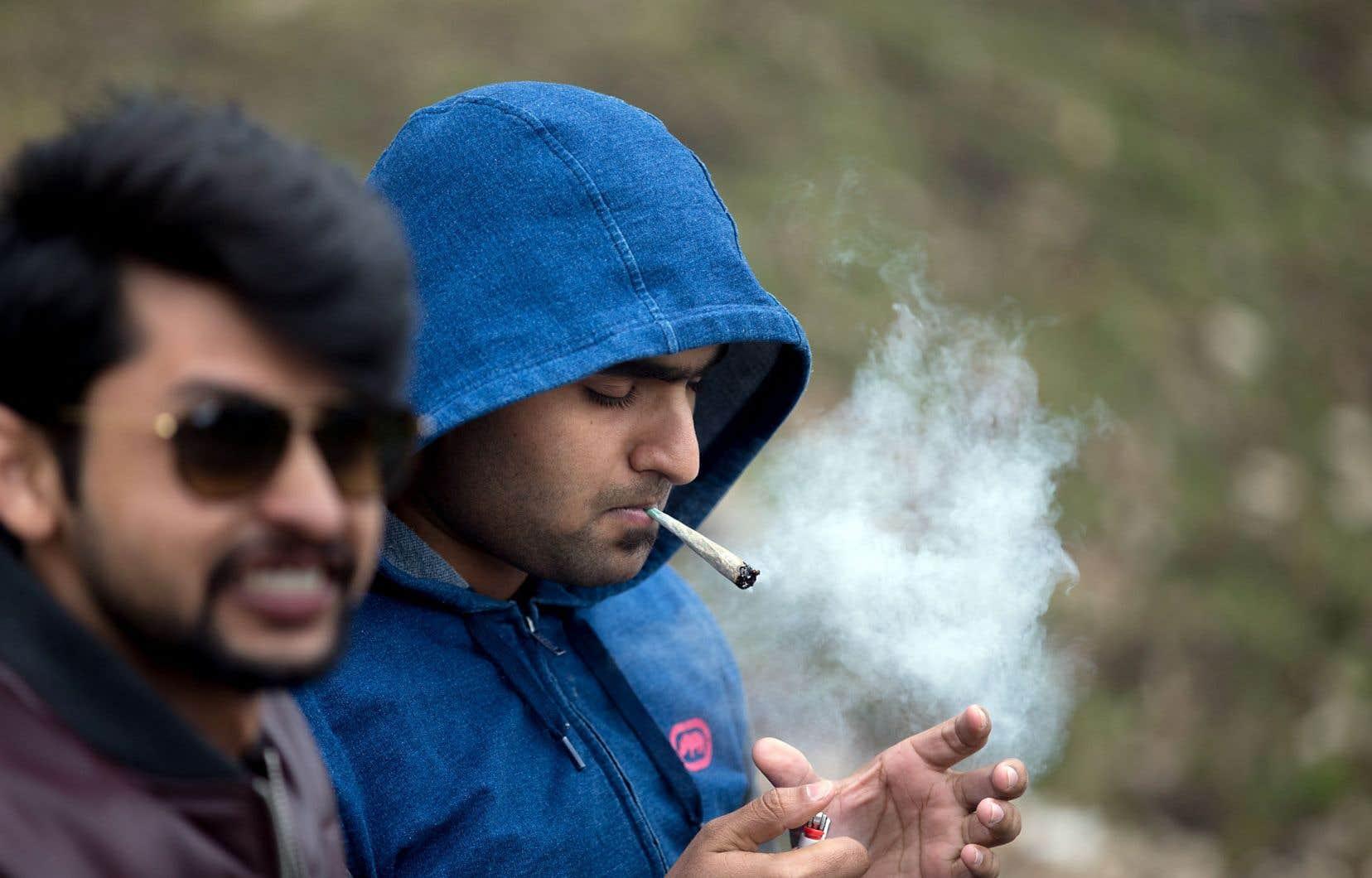 Le débat sur la légalisation du cannabis et les risques que cette drogue peut représenter pour les jeunes adultes soulève les passions.