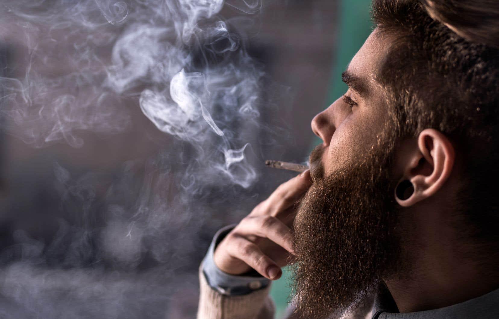 «Le Devoir» a donné la parole lundi à des chercheurs qui ont ainsi établi qu'il est impossible de détecter le niveau d'intoxication au cannabis en analysant uniquement la salive, le sang ou l'urine d'un individu.