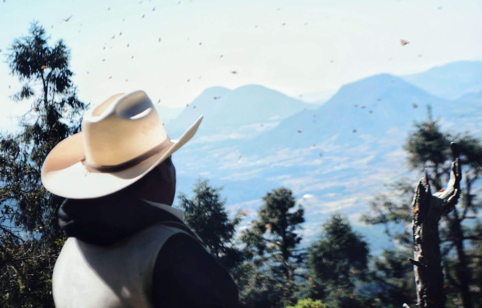 Rogelio, secrétaire de surveillance de l'ejido Cerro Prieto, veille sur les arbres «bouquets de papillons» dans la réserve de biosphère du papillon monarque.