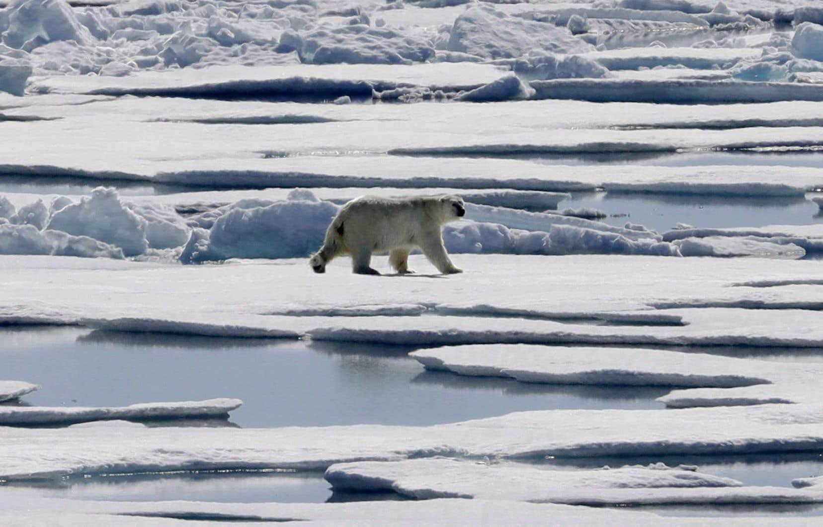 Ces eaux étaient anciennement gelées toute l'année, mais le réchauffement climatique continue de modifier l'Arctique et environ 40% de ce secteur était accessible l'an dernier.