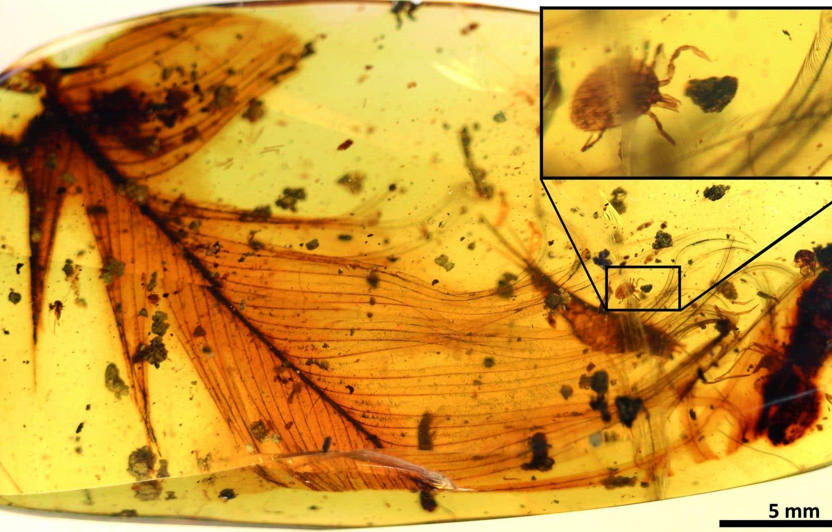 La découverte peut faire penser au film <em>Jurassic Park</em> dans lequel des chercheurs découvrent de l'ADN de dinosaure dans un moustique fossilisé dans de l'ambre.