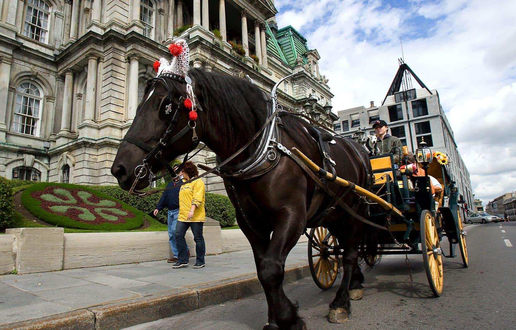 Les propriétaires de calèche se préparent à une bataille juridique pour garder le droit de circuler dans les rues de Montréal.