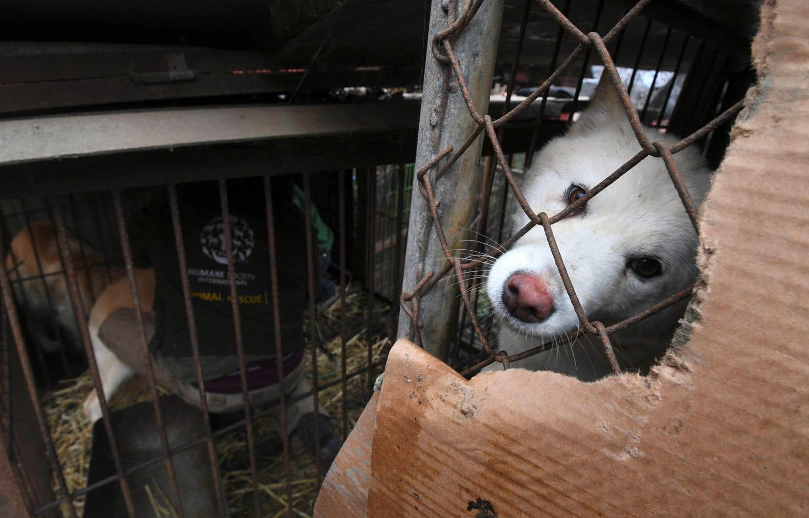D'après les estimations, les Sud-Coréens consomment un million de chiens environ chaque année.