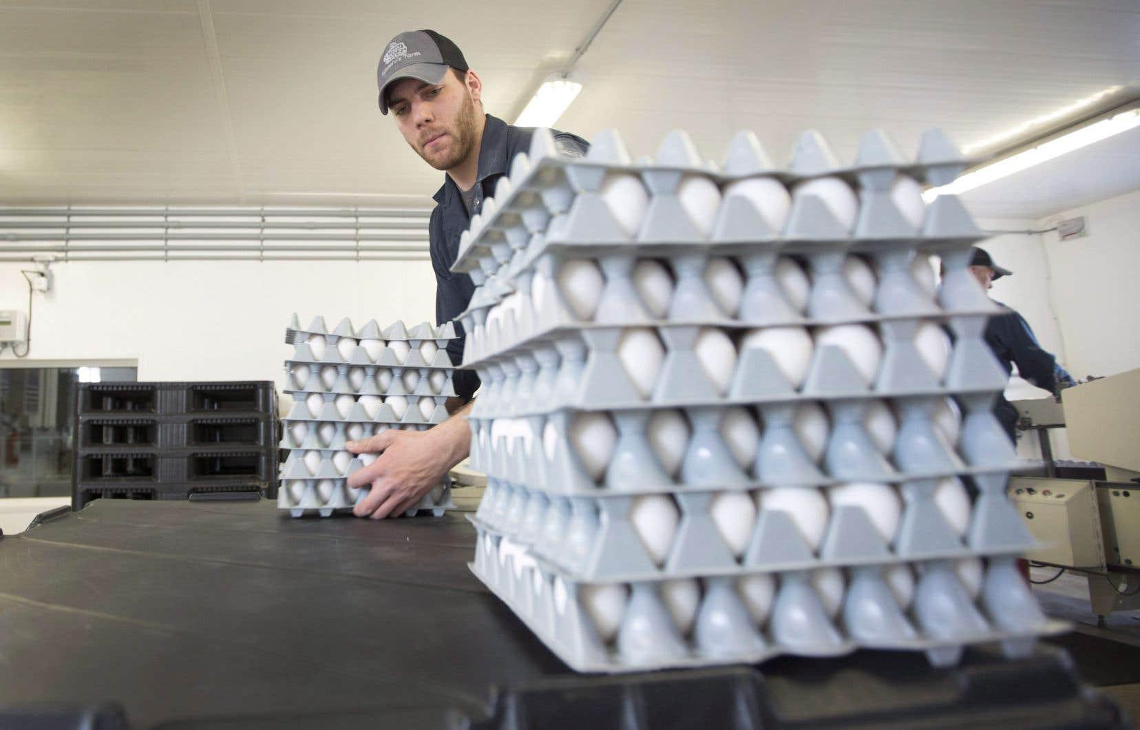 Laissés sans défense face à la concurrence américaine de gigantesques fermes généreusement subventionnées, les producteurs canadiens perdraient, entre autres, de 80% à 90% de leur propre marché national des œufs.