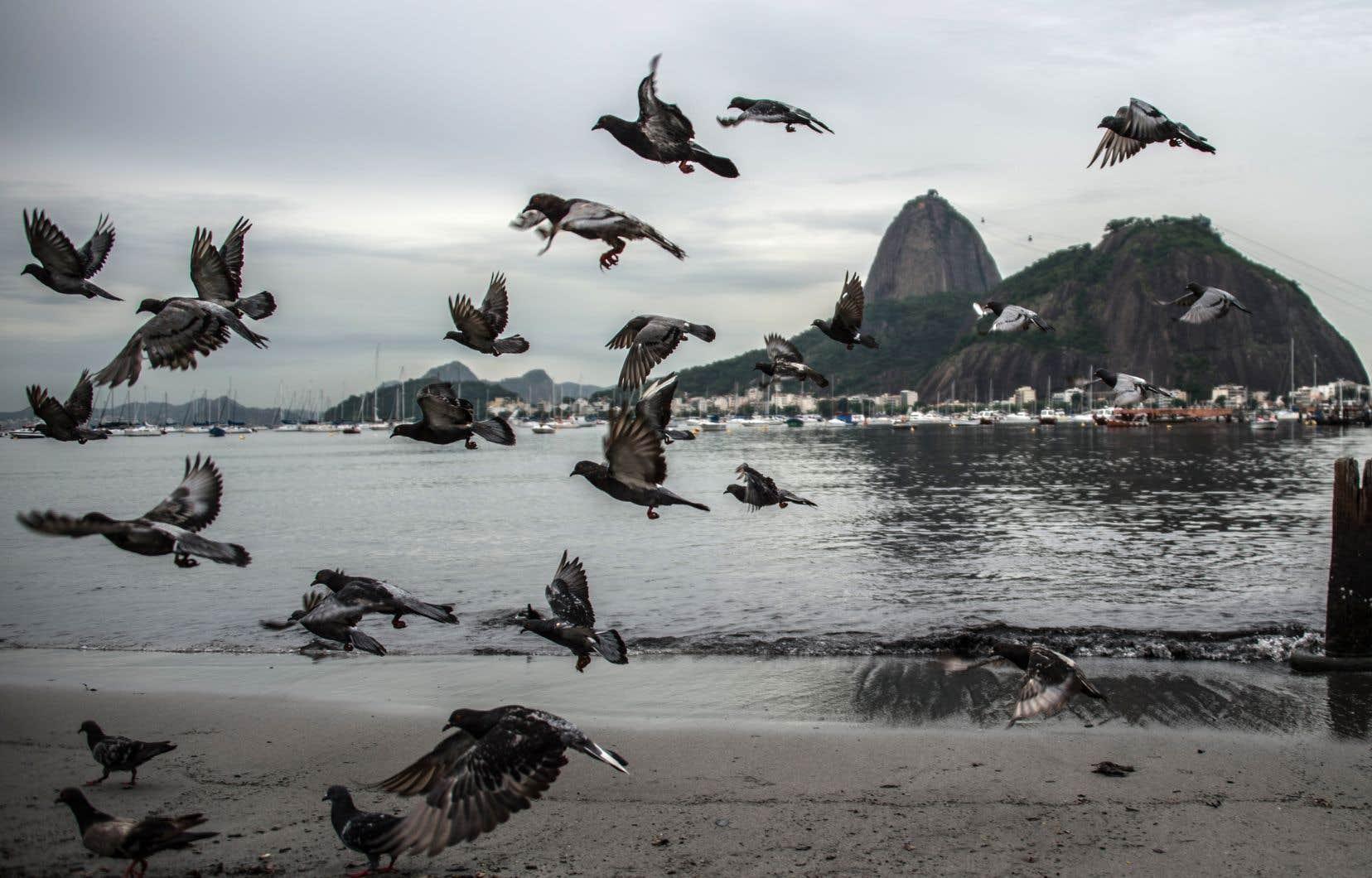 Son biographe américain Benjamin Moser décrit Clarice Lispectorcomme «un Tchekhov au féminin sur les plages de Guanabara» (notre photo).