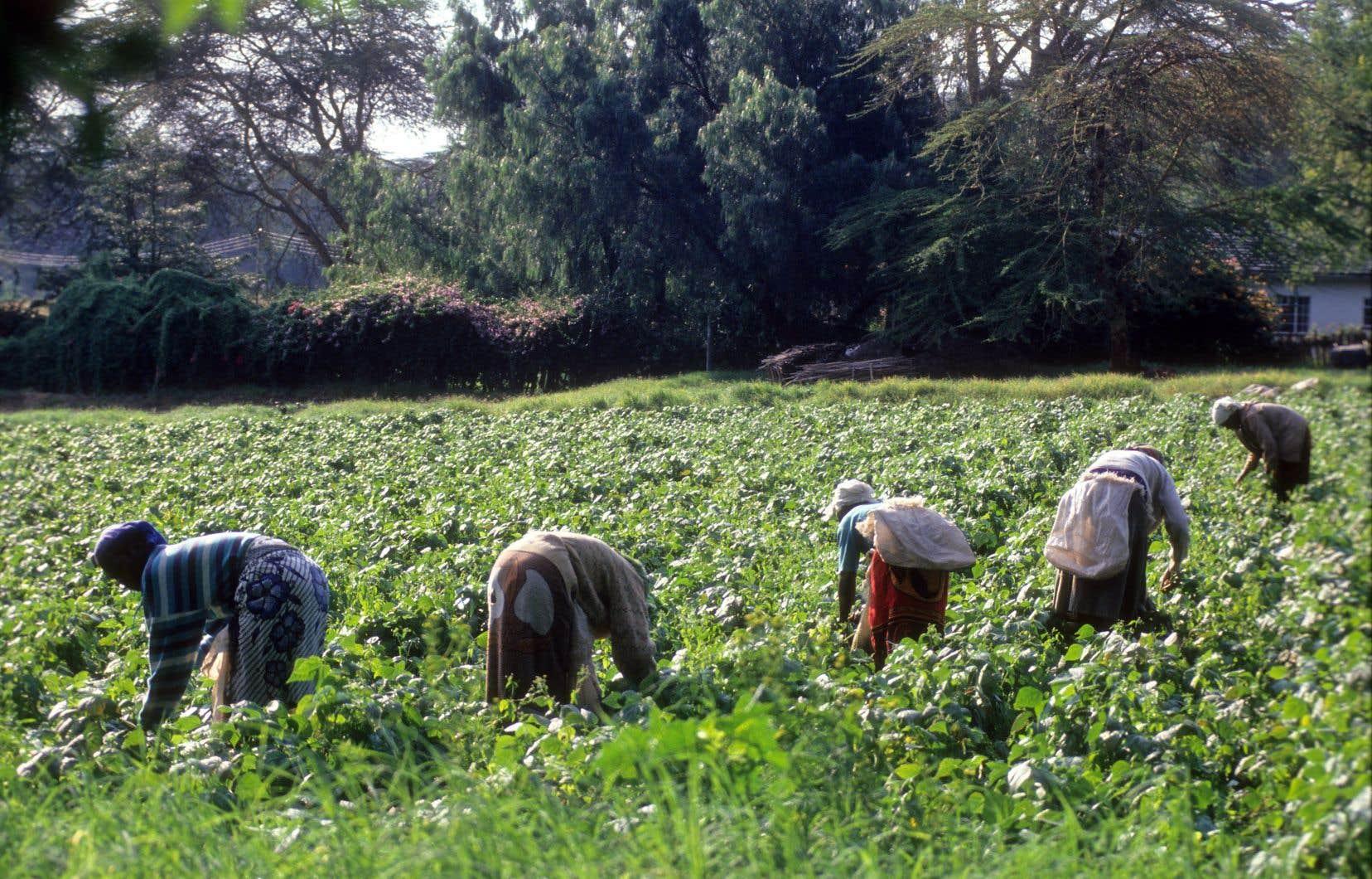 L'UPA DI s'applique à travailler auprès d'organisations locales, régionales et nationales, tout en appuyant les États dans le développement des politiques agricoles.