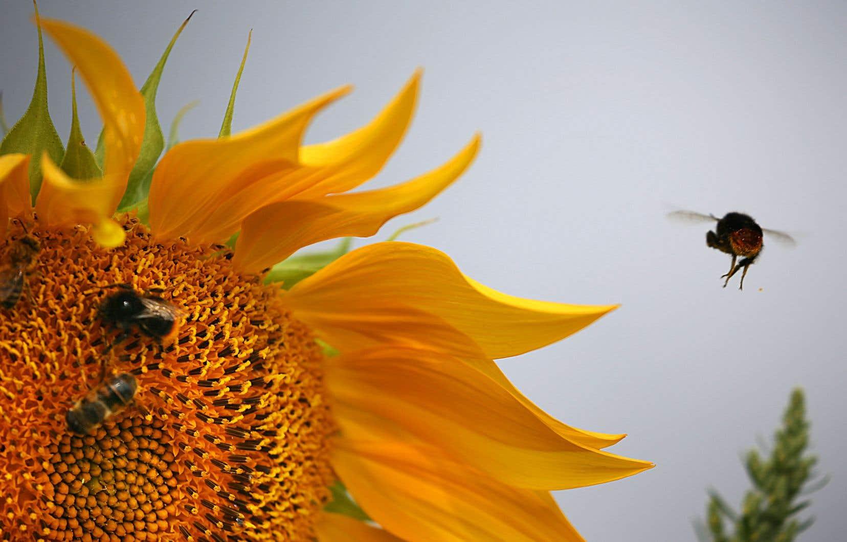 L'évaluation couvre non seulement les abeilles à miel, mais aussi les abeilles sauvages (bourdons, abeilles solitaires, etc.).