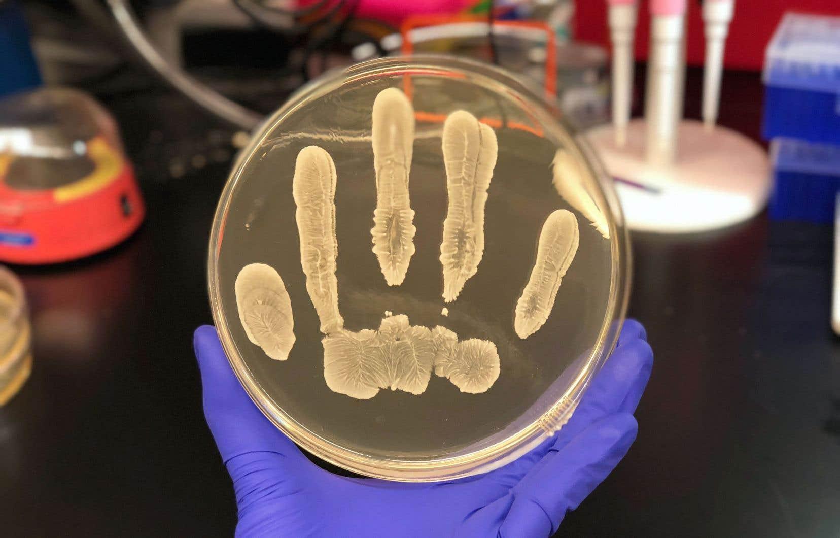 Certaines bactéries habitant sur la peau humaine produisent une molécule qui inhibe la croissance des cellules cancéreuses.