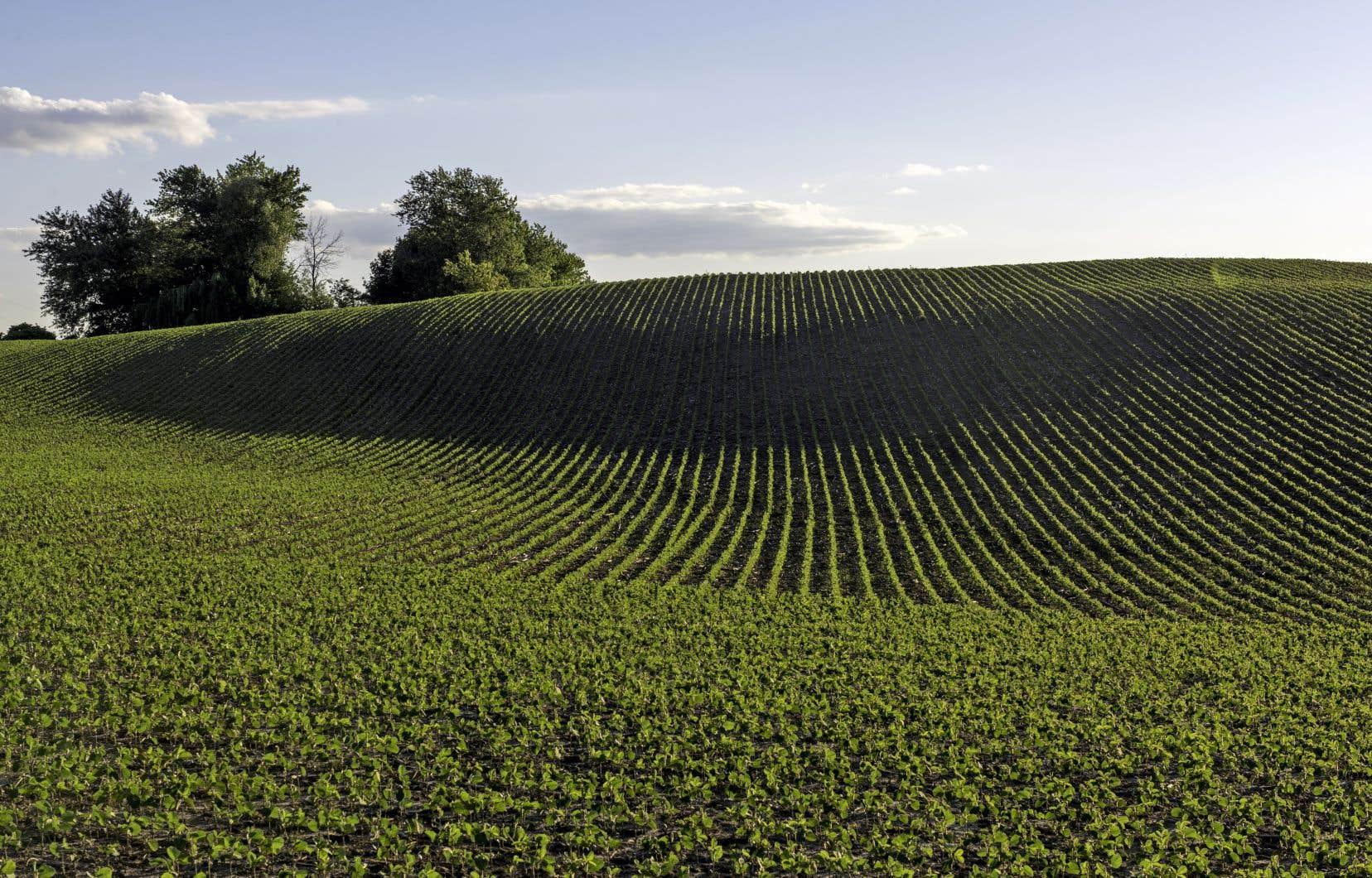Au Québec, plus de la moitié du soya cultivé a ses semences enrobées de néonicotinoïdes,pourtant considérés comme les plus dangereux pesticides pour la santé humaine et pour l'environnement.
