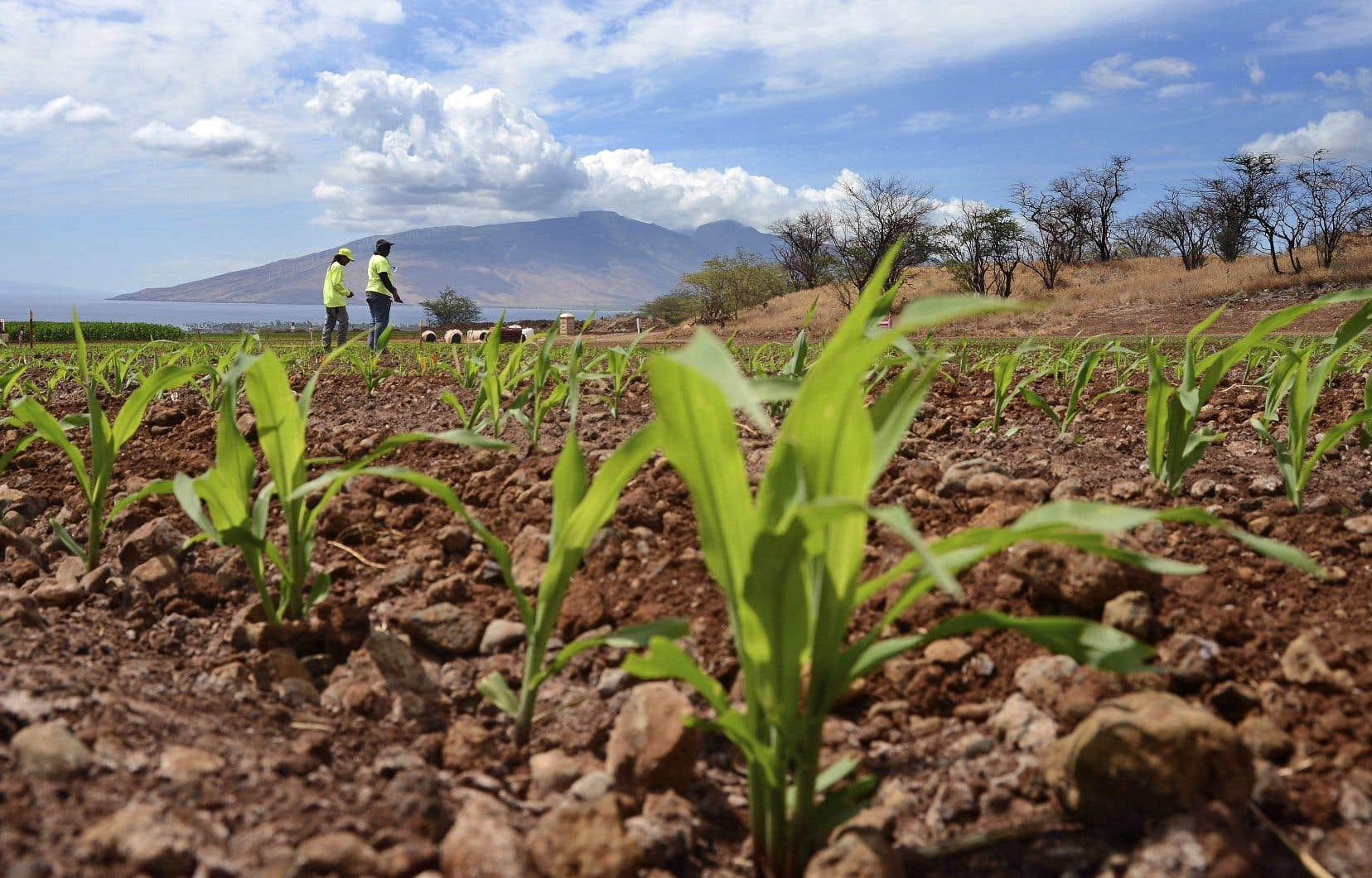 «Nos décisions permettent de garantir que la concurrence et l'innovation resteront effectives sur les marchés des semences, des pesticides et de l'agriculture numérique, même à l'issue de cette concentration», a déclaré la commissaire européenne à la Concurrence.