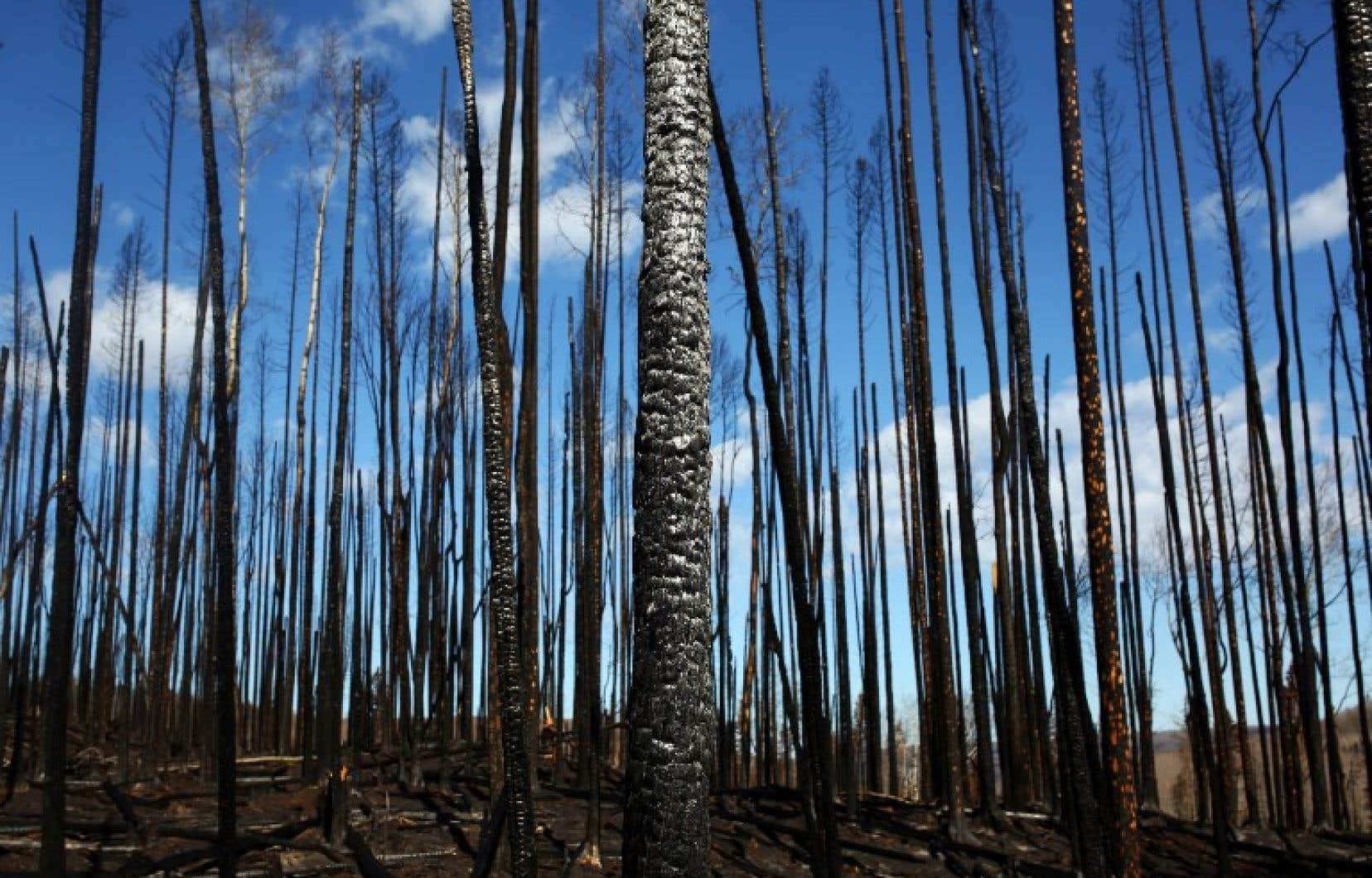 Les feux de forêt pourraient transformer entre 50 % et 75 % de la forêt boréale albertaine en prairie ou en forêt décidue ouverte.