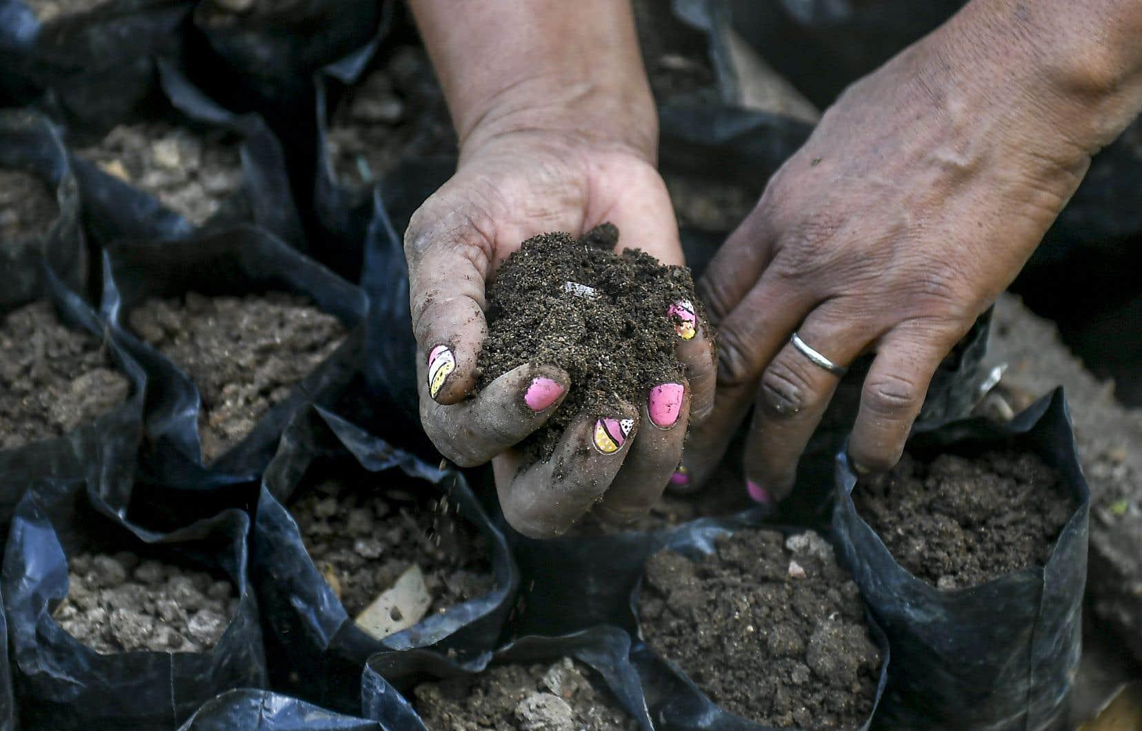 Mal exploités ou surexploités, les sols perdent en qualité.