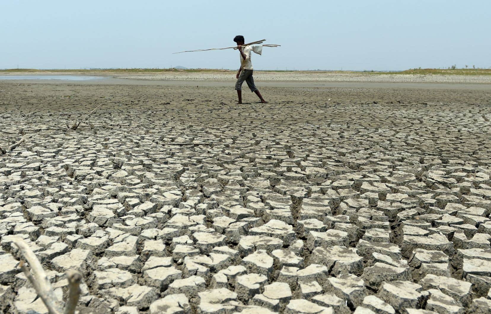 En cas de réchauffement de 1,5°C, «76% des pays étudiés enregistreraient une augmentation plus faible de leur vulnérabilité à l'insécurité alimentaire».