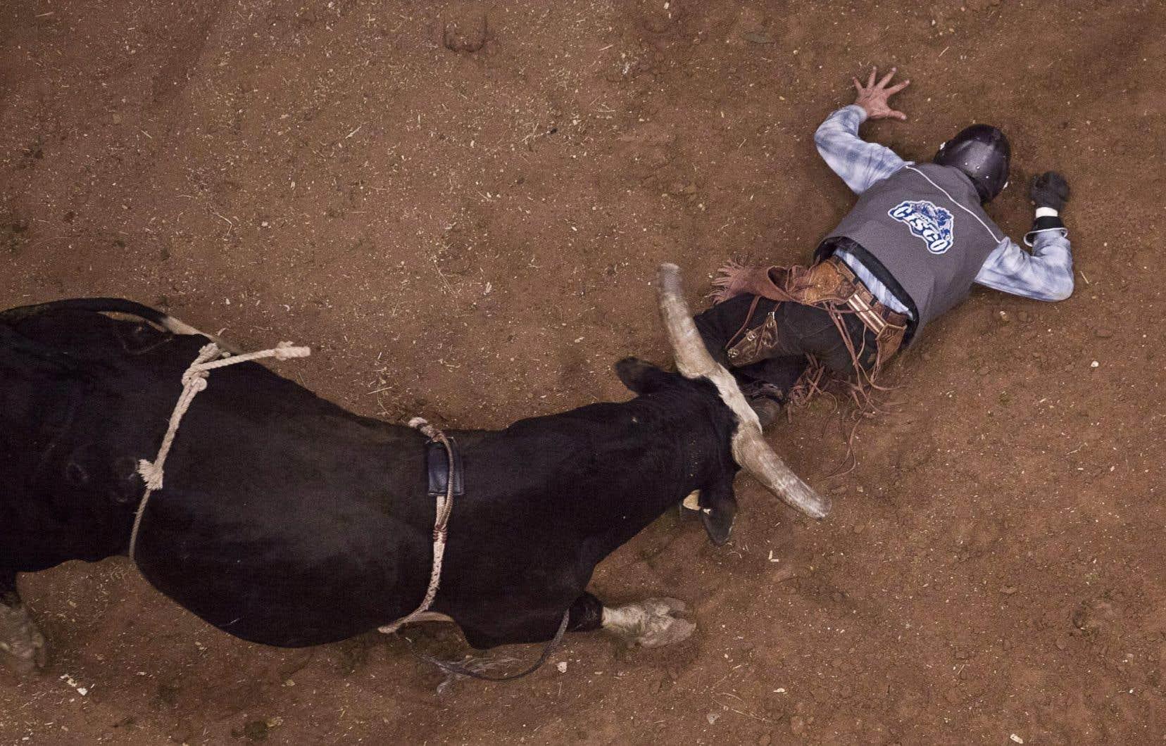 Le rapport de plus de 600 pages conclut que les activités de dressage soumettent les chevaux et les taureaux à des risques de lésions et de graves blessures.