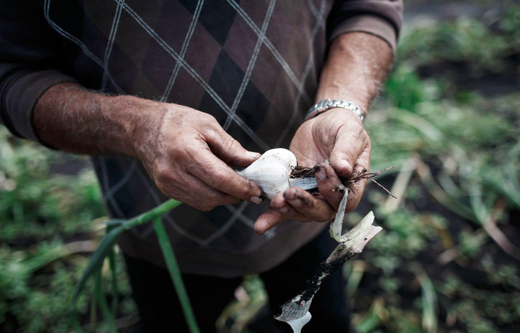 Jean Pronovost constate des «oublis notoires» liés aux «problèmes structuraux de l'agriculture» dans la nouvelle politique bioalimentaire.