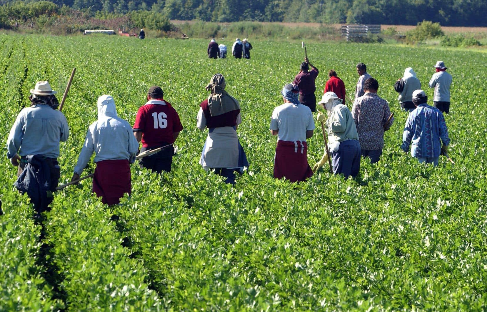 Les journées de travail des travailleurs migrants durent entre 10 et 13heures. Ceux-ci sont d'ailleurs constamment disponibles pour répondre aux besoins de l'employeur, explique le chercheur qui a partagé leur quotidien.