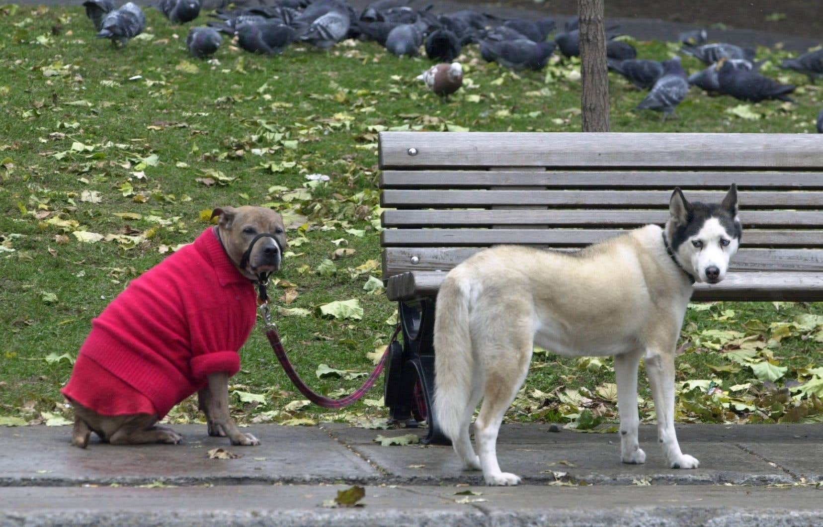 Au-delà du système judiciaire, il faudrait aussi que les citoyens soient plus vigilants et signalent plus vite des situations de maltraitance animale, estime l'auteure.