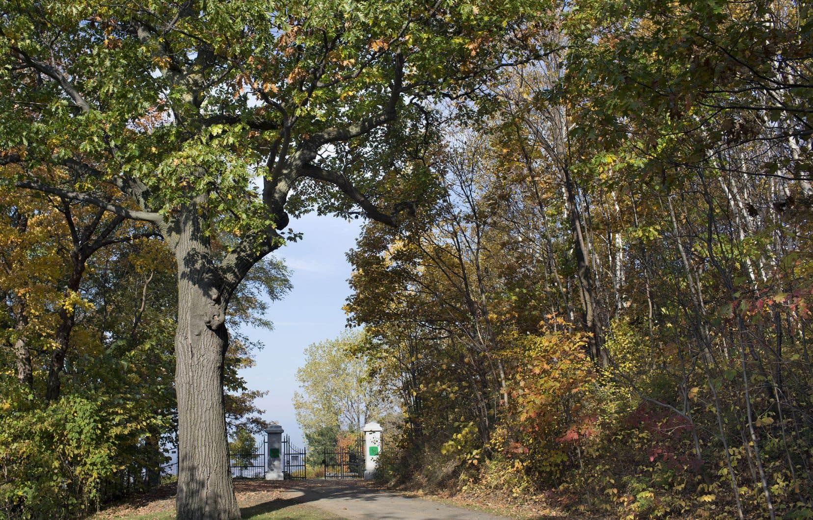 Un des projets financés par le programme Audace des Fonds de recherche du Québec (FRQ) est consacré à un laboratoire sur la forêt urbaine pour la santé.