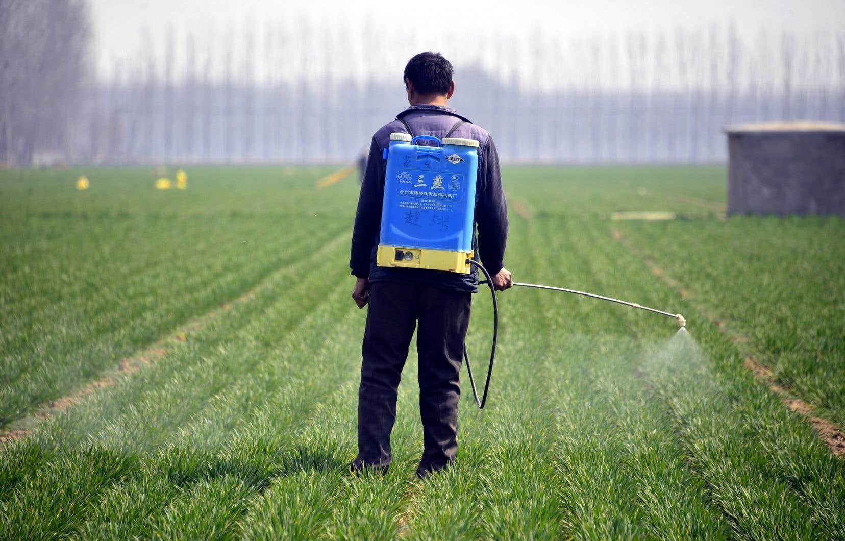 Un travailleur épand des pesticides dans un champ de blé à Liaocheng, dans l'est de la Chine. Selon la FAO,16% des sols chinois seraient pollués.