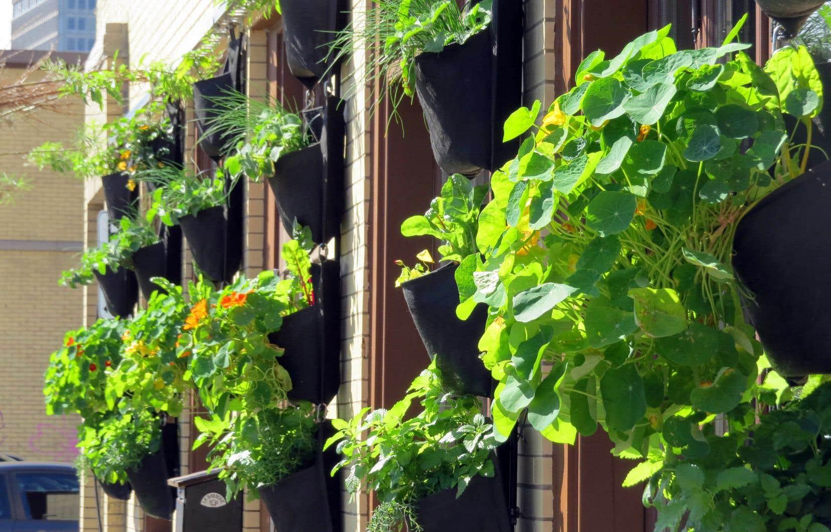De nombreuses plantes se cultivent à la verticale. Toutefois, certaines s'y prêtent mieux que d'autres.
