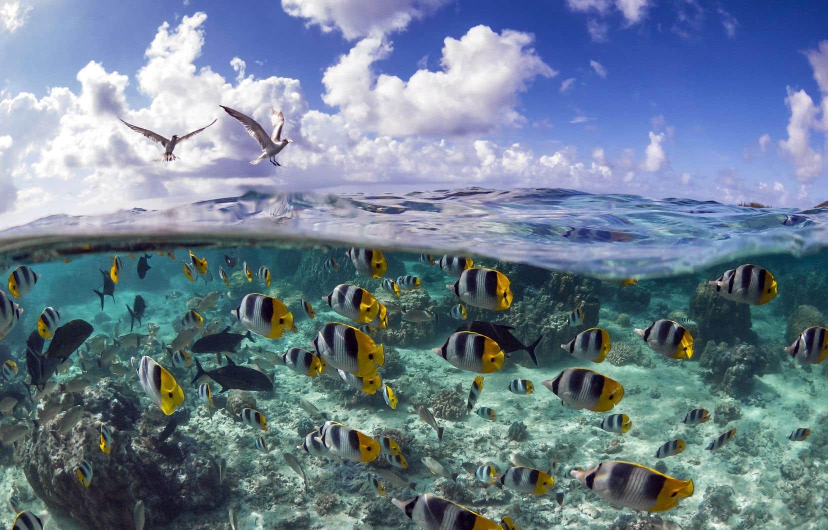 Essentiels à la vie sur Terre, les océans recouvrent environ 70% de la surface de la planète, dictent la météo, nourrissent des milliards de personnes, stockent 50fois plus de dioxyde de carbone que l'atmosphère et foisonnent d'espèces marines, dont certaines sont encore inconnues.