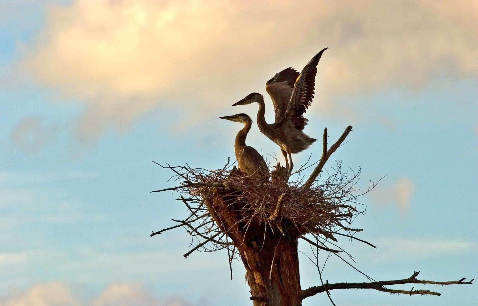J'ai toujours cru que les oiseaux étaient une espèce fidèle. Jusqu'à ce que j'apprenne que les oiseaux chanteurs sont des coureurs de jupons et que les grands hérons ont des taux de divorce de 100%.