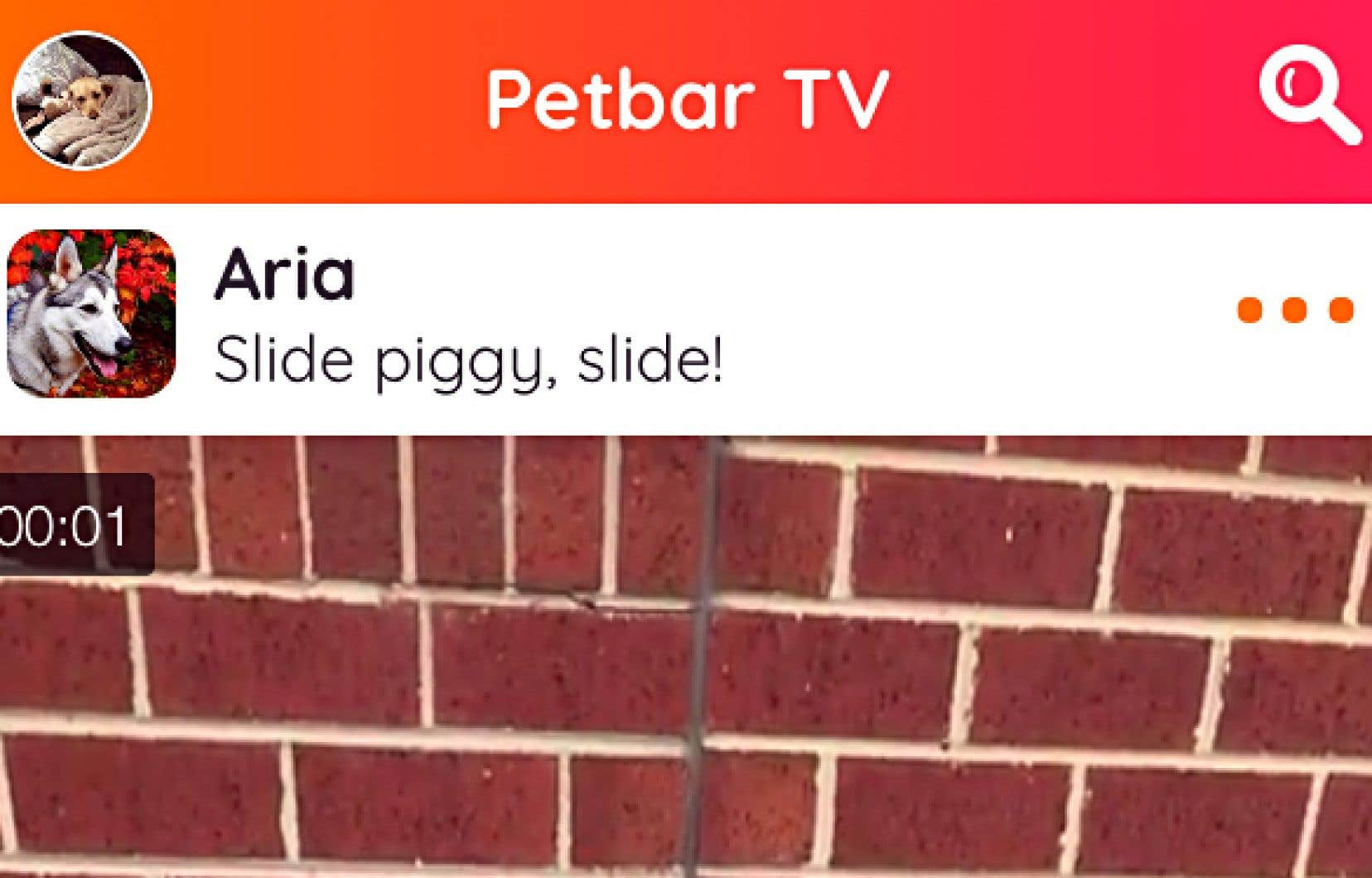 Petbar est faite spécifiquement pour partager des photos et courtes vidéos de vos animaux de compagnie.