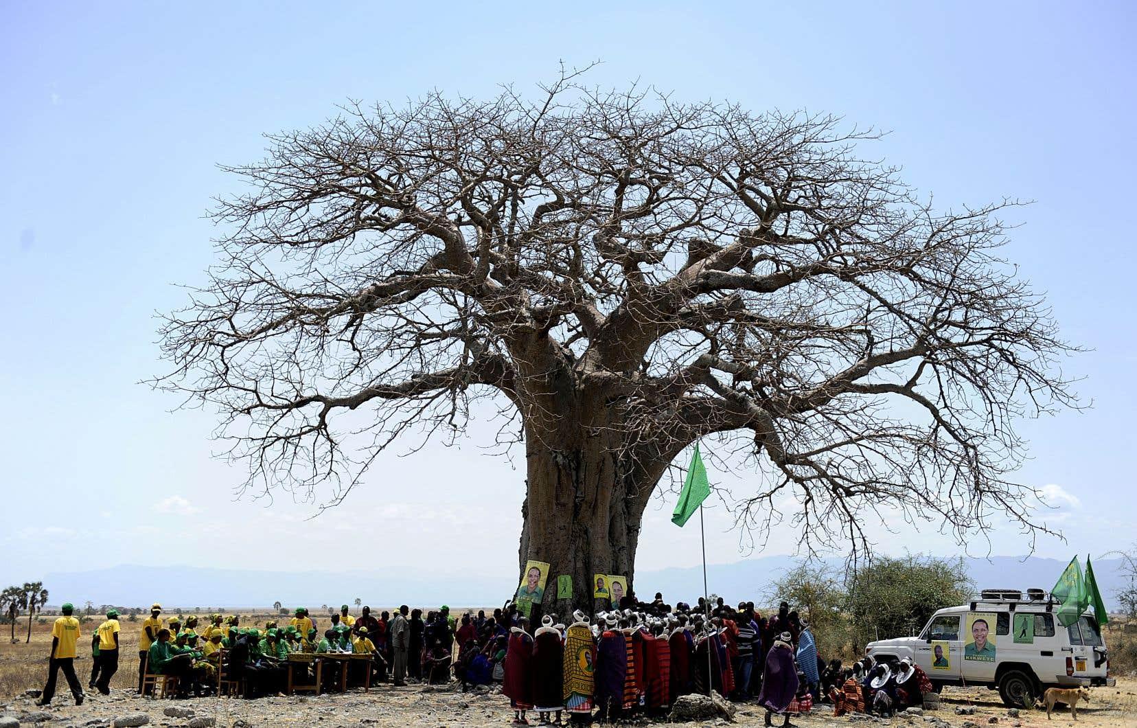 Âgés de 1100 à 2500 ans et tutoyant le ciel, les baobabs sont une des silhouettes les plus emblématiques des savanes arides, repérables à des kilomètres à la ronde.